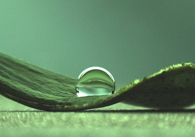 Water droplets on a lotus leaf. (Image: C. Falcón Garcia / TUM)